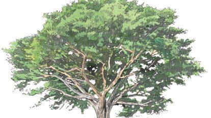 Special Contents  木の家を知る。まずは木について知る。