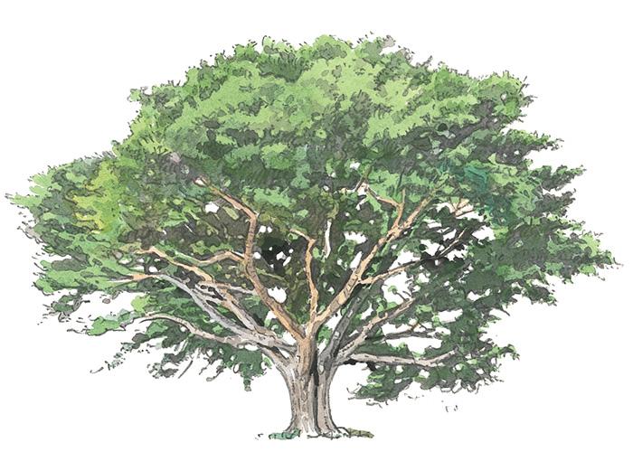 Special Contents 木の家を知る。まずは木について知る。 | BRUTUS ...