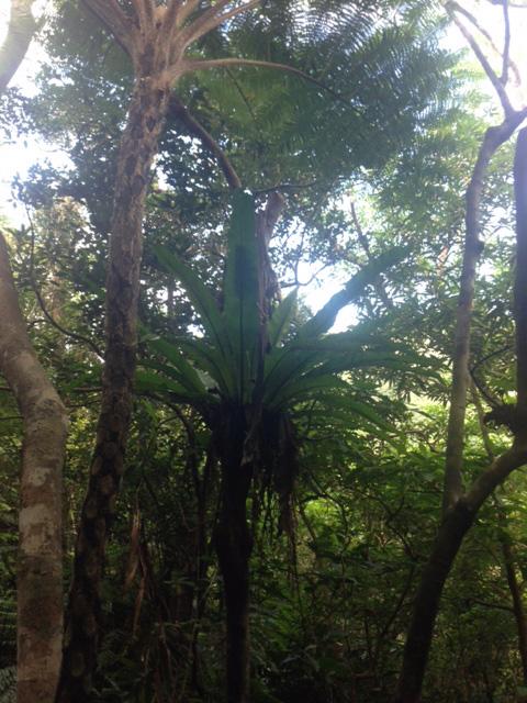 日本最小、もしくは最大の生き物が生息するという西表島ジャングル。侵入者が、どでかいブヨに刺される運命も仕方なし。