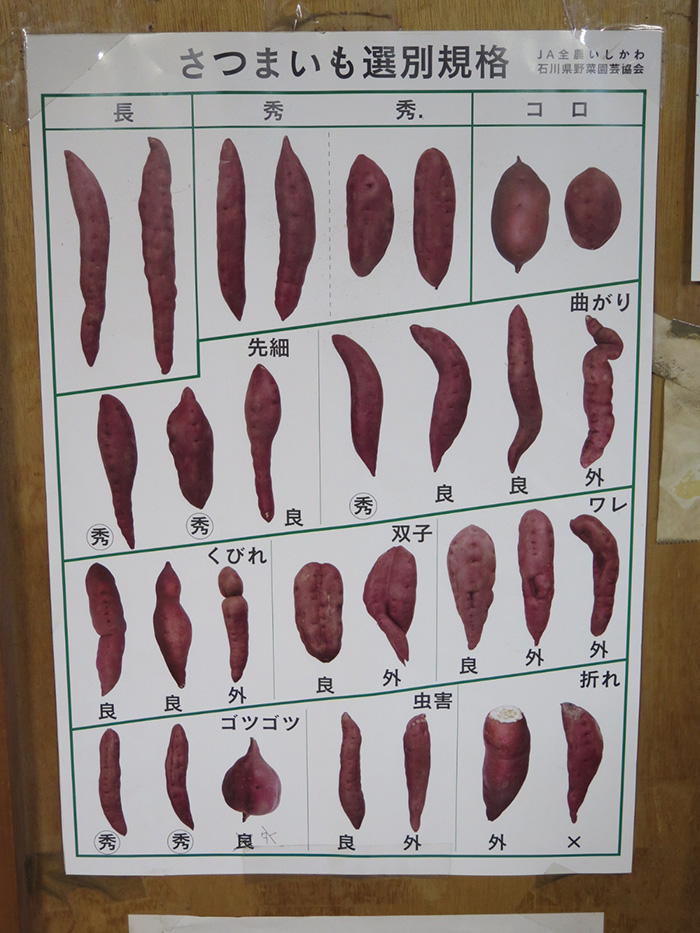 作業場の壁に貼ってある五郎島金時分別表。Tシャツにプリントしたら楽しいかもしれませんね!