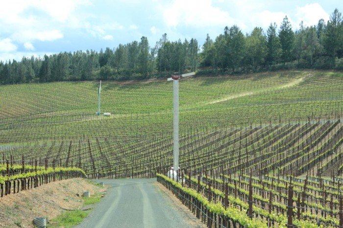 Wine & Story カリフォルニアスタイル– 5 – ソノマのワイナリー。