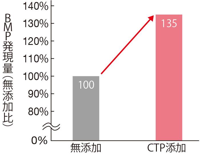 CTPを添加して毛乳頭細胞を培養すると、無添加のものよりも1.35倍、毛乳頭細胞におけるBMPの産生が高まることがわかった。つまり、毛母細胞を活性化する。(三省製薬調べ)