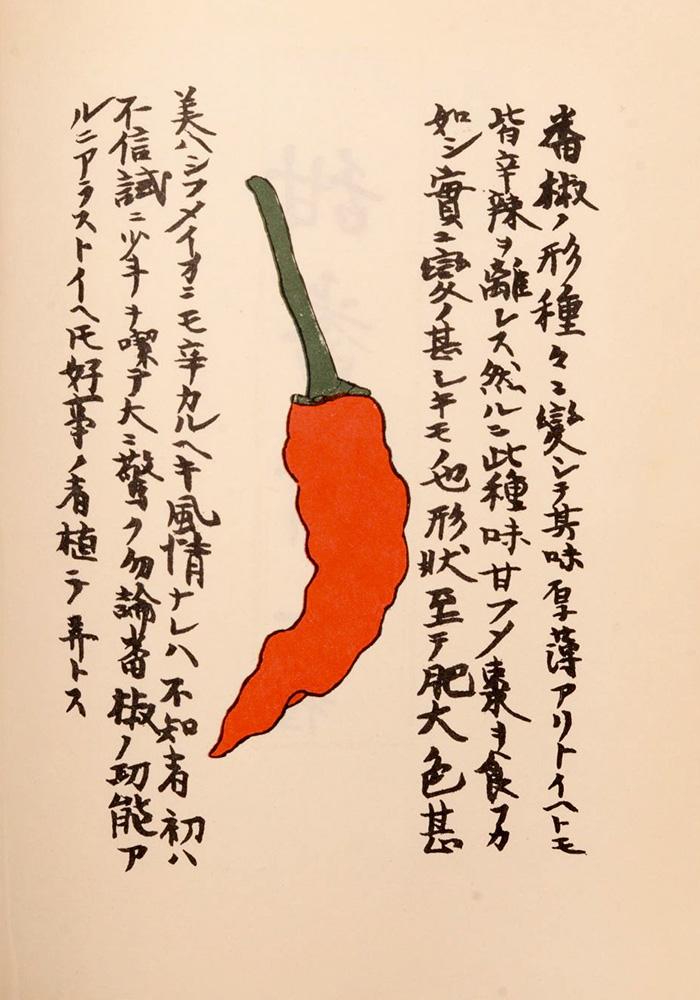 表紙の唐辛子の絵は江戸の平賀源内の筆。『番椒譜』と名付けられた唐辛子図鑑では、さまざまな唐辛子を形や色で分類して精緻に描いています。源内先生も辛いもの好きだったのね!