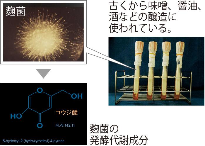 コウジ酸は、麴の麴菌が味噌や酒などをつくる時にできる発酵代謝成分。日本の科学者によって1907年に発見された。その後1975年に三省製薬が美白力を発見。