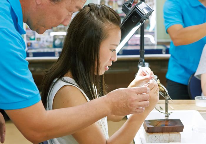 真珠養殖の真髄、「核入れ」を体験!