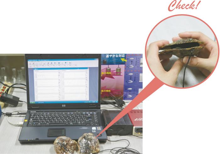 """1.真珠の養殖を学ぶ 貝殻にセンサーをつけて海の様子を察知する""""貝リンガル""""。赤潮の発生など環境に変化があると貝殻の開閉の動きも変わる。"""
