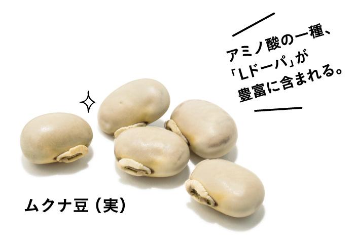 この生命力がスゴい! ムクナ豆って、こんな植物。