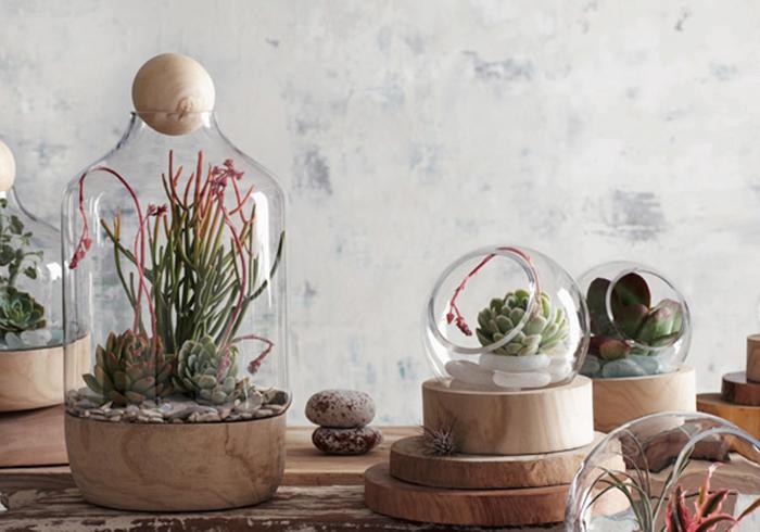 植物をオシャレに見せるガラスの中の小さなガーデン