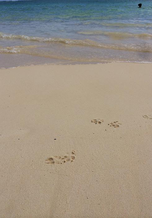 本誌エリアガイドに登場しているわんこの足跡。通称〝天国のビーチ〟にて、天使に出会っちゃいました!