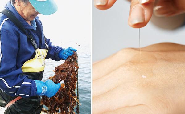 左・寒流と暖流が交じり合う函館近海のみで収穫される希少ながごめ昆布を使用。右・肌にのせた瞬間に糸を引くほどのとろみが、水分保持力に一役買う。