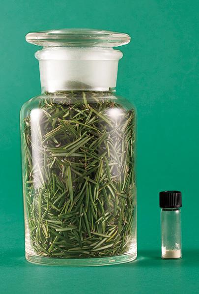 100gのローズマリーの葉から抽出できるセラムバイタルは僅か0.1g。希少な成分だ。