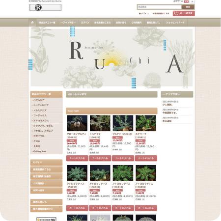 Succulent Box Ruchia