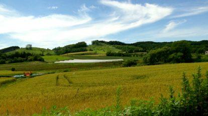 新連載より。北海道ではいったい山がいくらで買えるのか……?