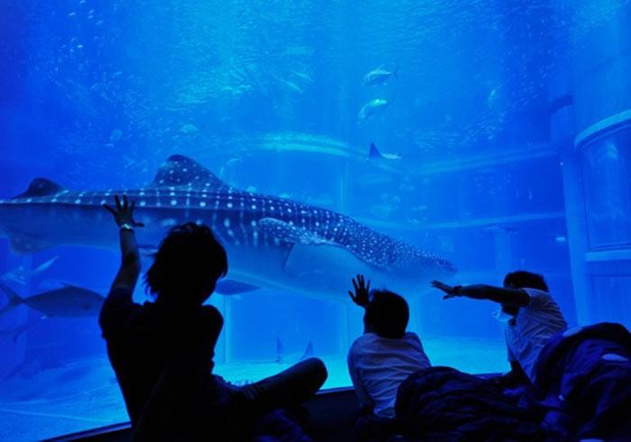 ジンベエザメが泳ぐ目の前で宿泊。大人向け「おとまりスクール」開催!