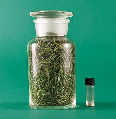 セラムバイタルはローズマリーの生葉100gから0.1gしか抽出できない。希少な成分だ。