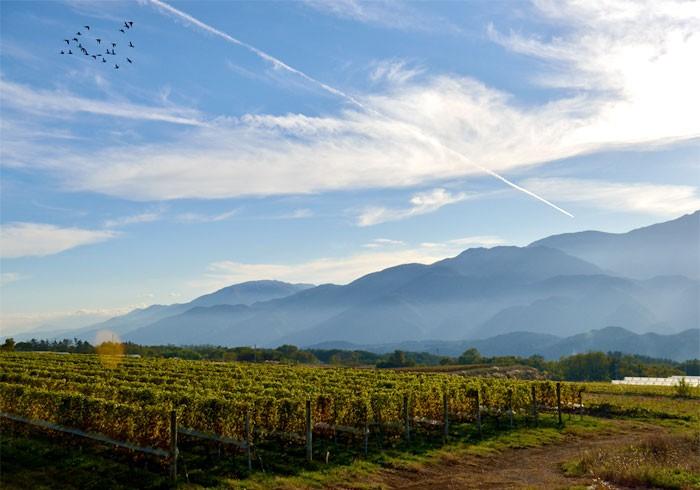 """ワインの醸造家は""""理系""""の仕事。こだわりを貫く〈ミサワワイナリー〉"""