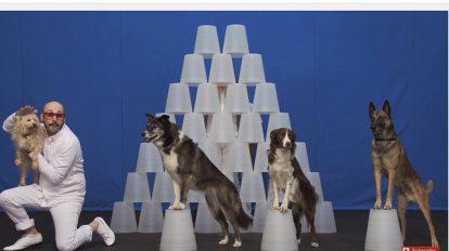 Special Contents DOG EAR : 巷にあふれる犬動画を考察する。