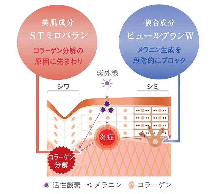 STミロバランは、コラーゲン分解を阻止し、シワを予防。ピュールブランWは、シミができるごく初期の段階でストップをかける。