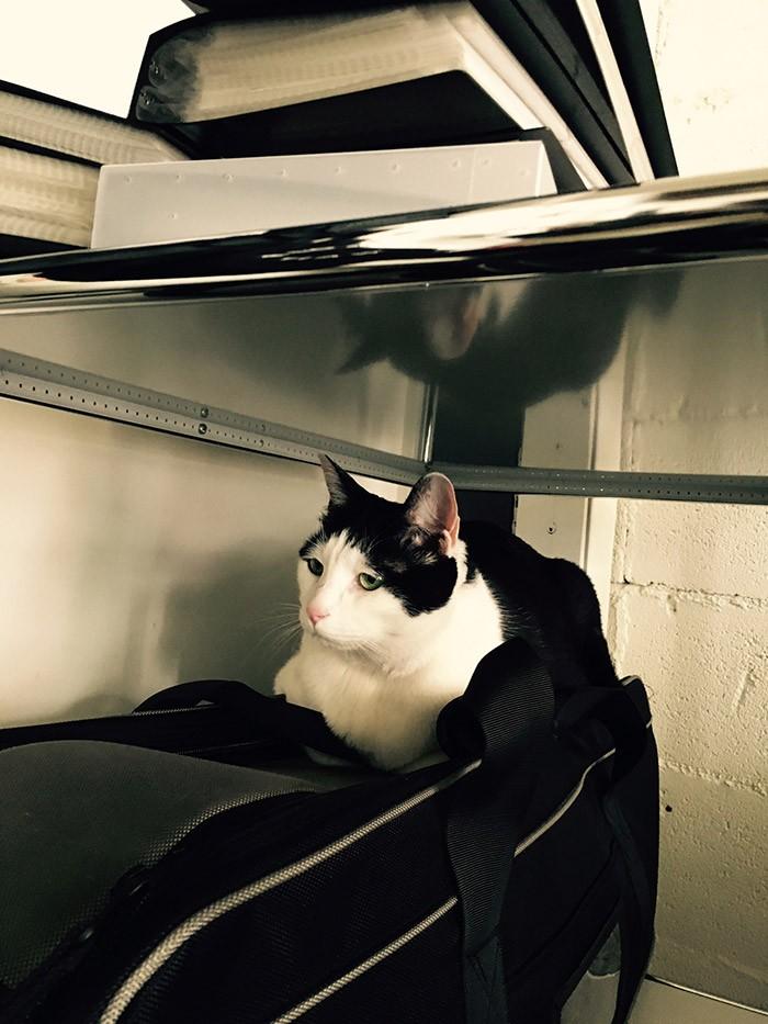 フォトグラファー山口明さんの愛猫、パンチョ兄さん。an•an猫特集の表紙になった有名猫です。今回私の取材先の家(事務所除く)には100%の確率で犬か猫がいました。飼い主の心がオーガナイズされていると、彼らも心穏やかに暮らせるのでしょうね…。