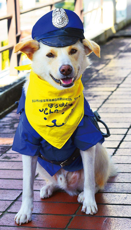 防犯パトロール犬の証しは黄色いバンダナ。もか吉は写真を撮られるのが大好きで、常にカメラ目線だ。