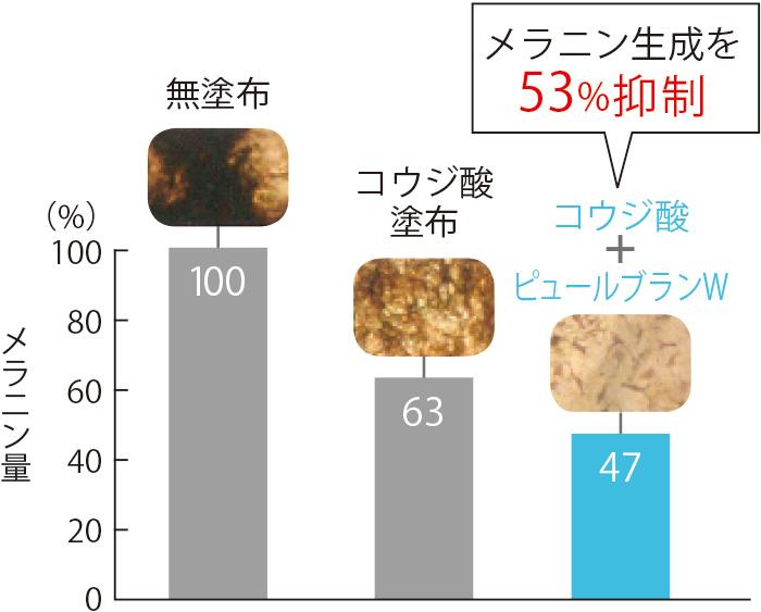三次元培養皮膚モデルを使った比較。コウジ酸+ピュールブランWを合わせるとメラニン生成が無塗布時の53%も抑制される。 (三省製薬調べ)
