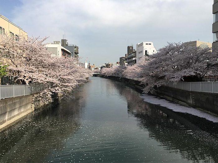 撮影をしたときはスタジオ近くの桜が満開でしたが、今は汗ばむくらいの気温に。あっという間に夏が来ちゃいます、急がなきゃ!