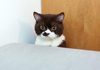 ilove.catとコラボ