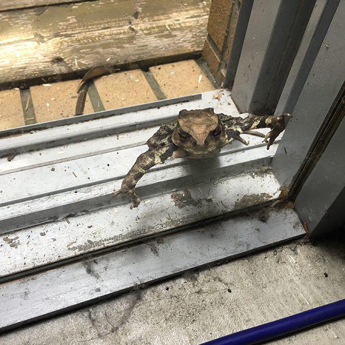 キスマイ撮影スタジオの中庭にいたカエル。ちょっとグロいですが、実はカエルは世界各地で幸運の象徴とされてます。これもあなたの恋愛成就祈願として添付します!