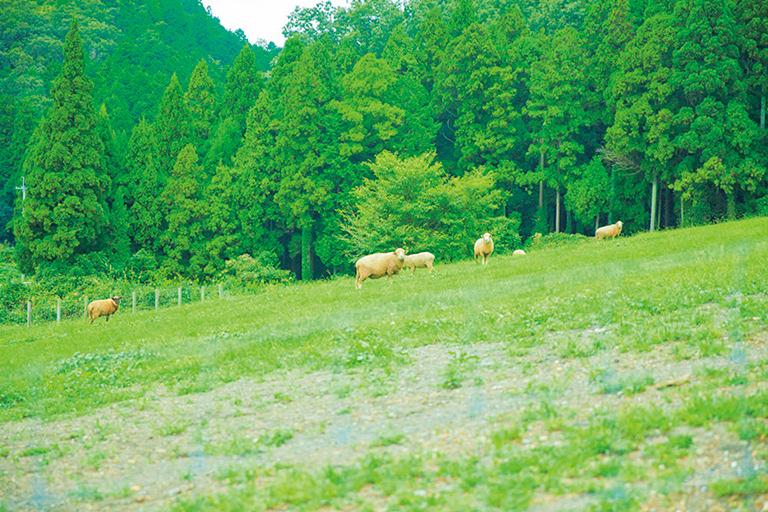 #ローザンベリー多和田 #羊ふれあい