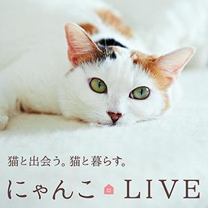 「anan特別編集にゃんこLIVE」一緒に暮らせばもっとかわいい!発売中!