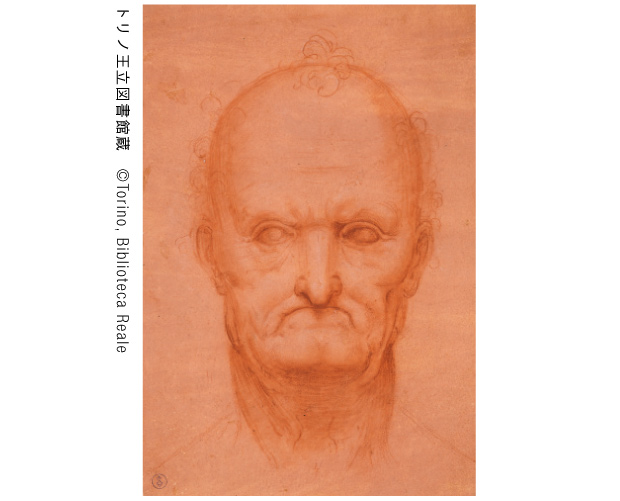 レオナルド・ダ・ヴィンチあるいはチェーザレ・ダ・セスト「老人の頭部」1510−15年頃 トリノ王立図書館蔵 ©Torino, Biblioteca Reale