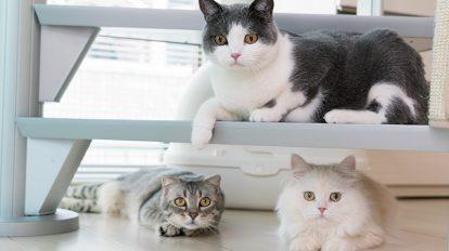 猫はなぜ、こんなにも私たちを惹きつけるのか? クロワッサン 第一特集のご紹介 No.954