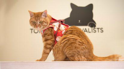 大事な猫と、コミュニケーションをとっていますか? クロワッサン 編集部こぼれ話 No.954
