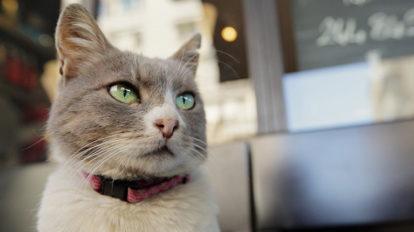 『猫が教えてくれたこと』プレスシート(非売品)を3名に。