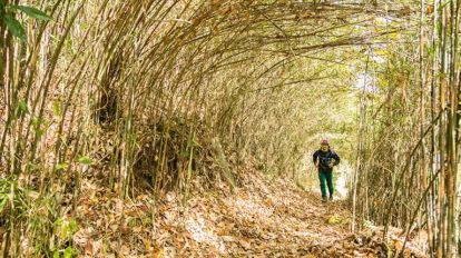 Tarzan Trails GPSデータ[町田市・ふるさと村&谷戸トレイル] NO.734