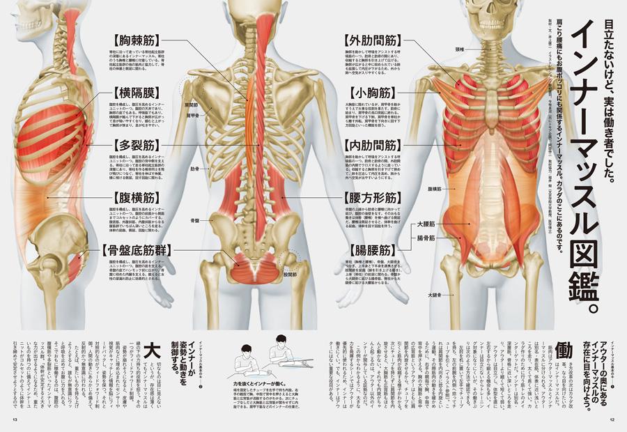 「筋肉 インナー アウター」の画像検索結果
