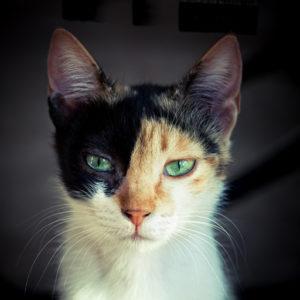 猫さま写真、投稿募集!