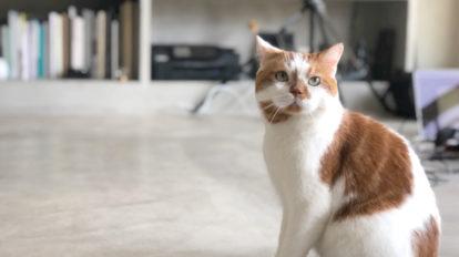 anan猫特集常連のあの猫さまが、ついに表紙に。 COVER STORY No.2108