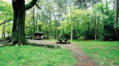 ここが私の好きな公園。 Special Contents BRUTUS No.874