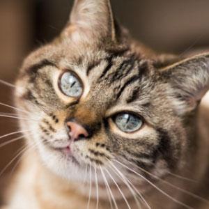 猫さま特集です! 猫さま写真を募集します。