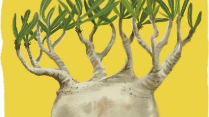 珍奇植物のデザイン学。 Special Contents BRUTUS No.896