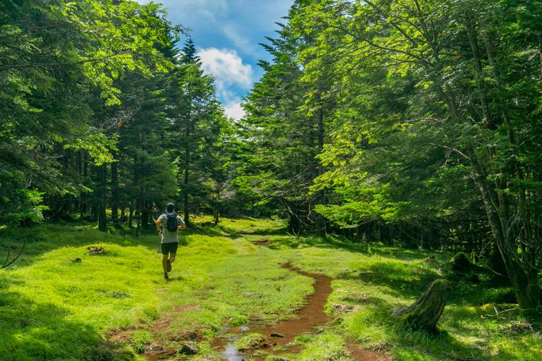 Tarzan Trails GPSデータ[白駒池]トレイル NO.770