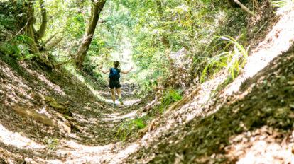 Tarzan Trails GPSデータ[相原高尾]トレイル NO.774