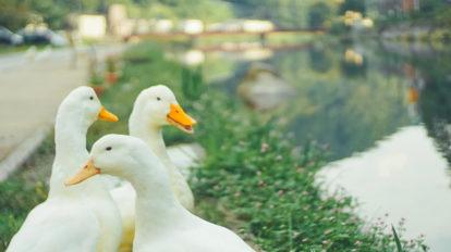 芸術の秋を味わうアート巡りへ。岡山県北部で温泉とアートを楽しむ「美作三湯芸術温度」が開催中。