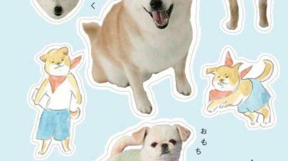 インスタが犬でいっぱい From Editors No.913