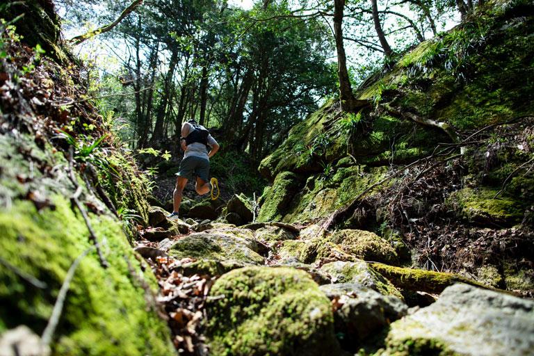 Tarzan Trails GPSデータ[大地峠]トレイル NO.790