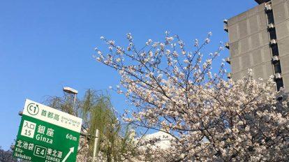 歩くときっと、自分だけの東京の正解が見つかる。 From Editors No.919