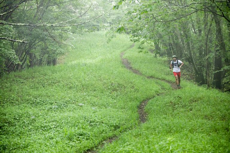 Tarzan Trails GPSデータ[小楢山]トレイル NO.795