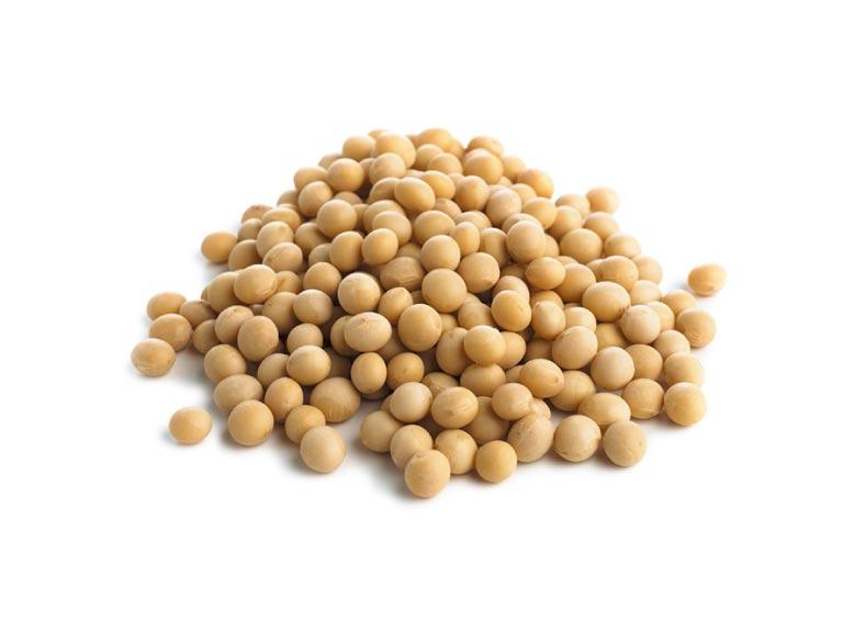 不溶性食物繊維 大豆