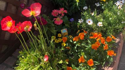 通りすがりのお宅の前の花壇の寄せ植え。